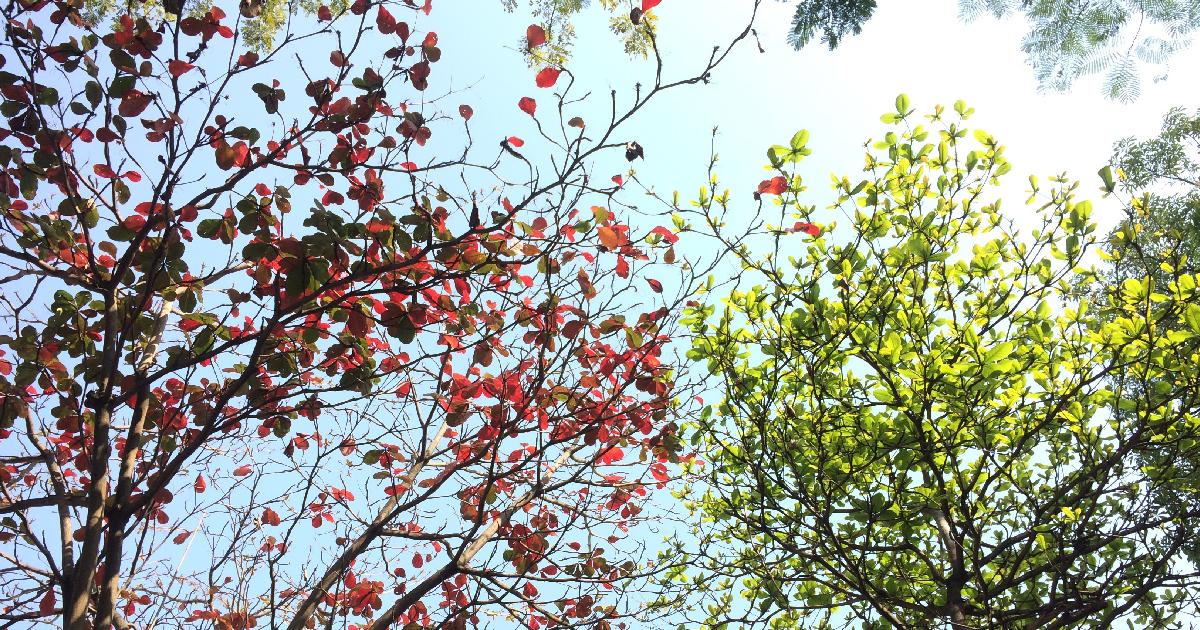 Copacii se pregătesc de trecerea de la sezonul rece la cel cald